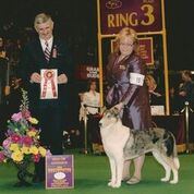 Banzai at the Westminster Dog Show